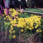 Rain garden flowers in bloom